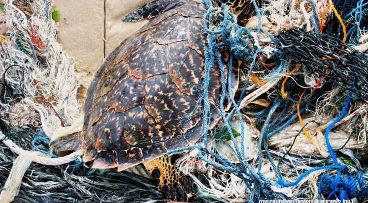 สัตว์ทะเลหายาก วาฬ-เต่า ตายพุ่งเฉียด 300 ตัวต่อปีเหตุกินถุงพลาสติก