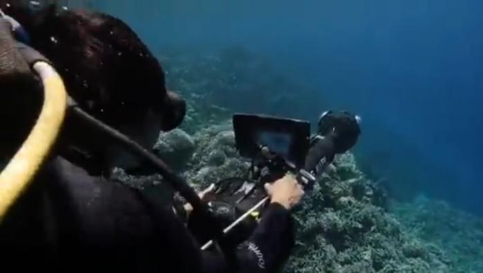 เทคโนโลยีใต้น้ำยืดอายุปะการัง