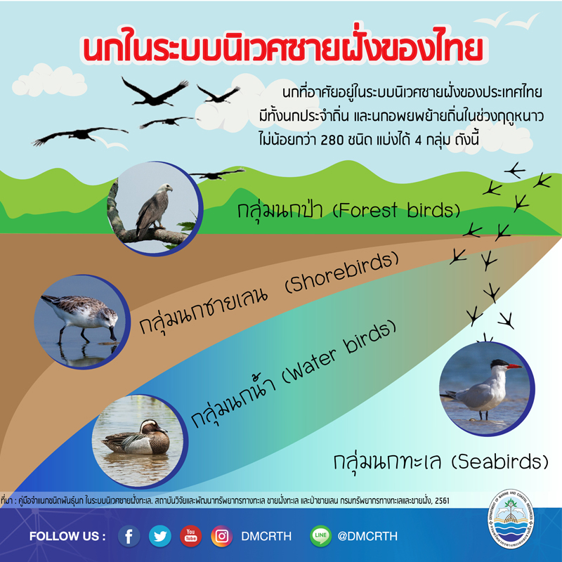 นกที่อาศัยอยู่ในระบบนิเวศชายฝั่งทะเลของประเทศไทย