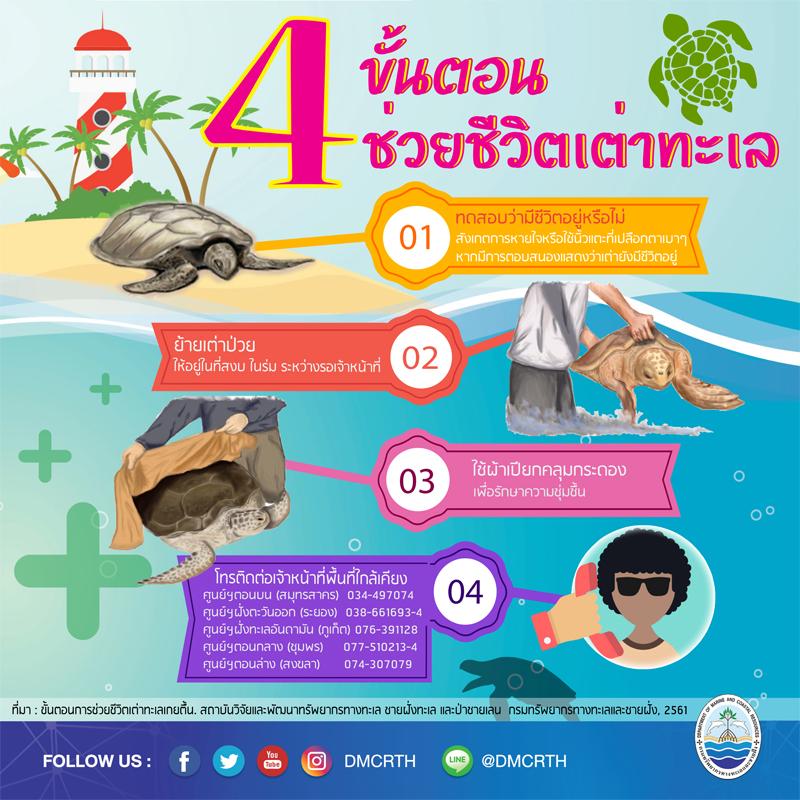 4 ขั้นตอน ง่ายๆ ในการช่วยชีวิตเต่าทะเล