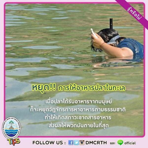 หยุด!! การให้อาหารปลาในทะเล