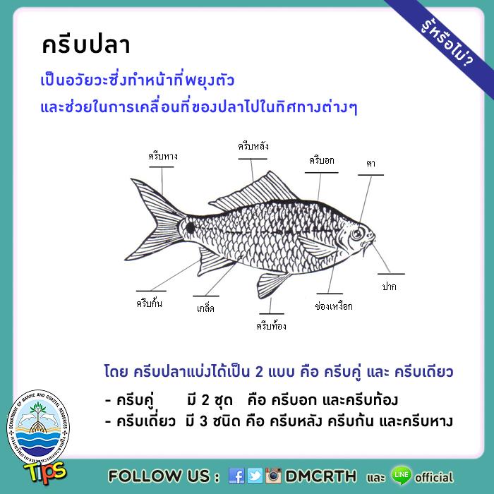 ครีบปลา (fin)