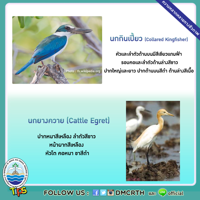 นกในพื้นที่ชุ่มน้ำและป่าชายเลน
