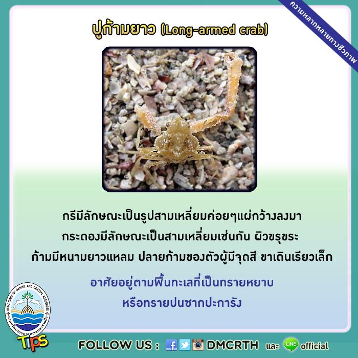 ปูก้ามยาว (Long-armed crab)