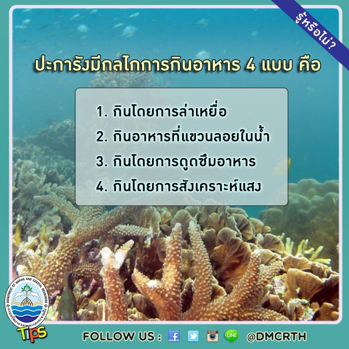 กลไกการกินอาหารของปะการัง