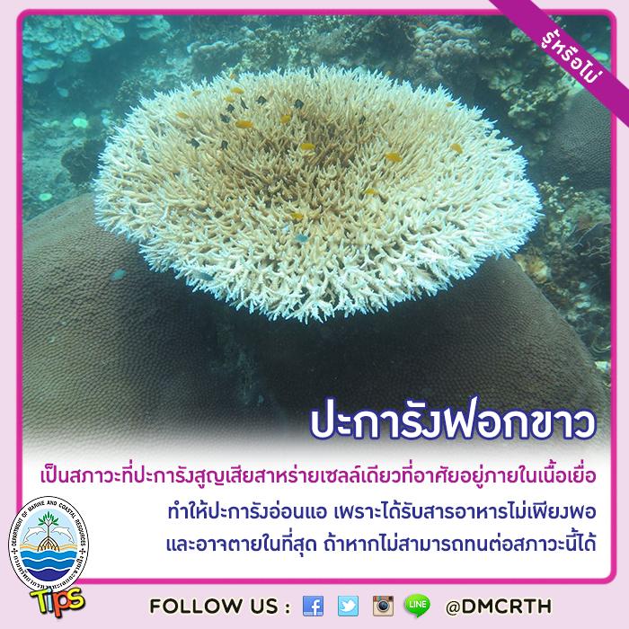 สาเหตุของการเกิดปะการังฟอกขาว