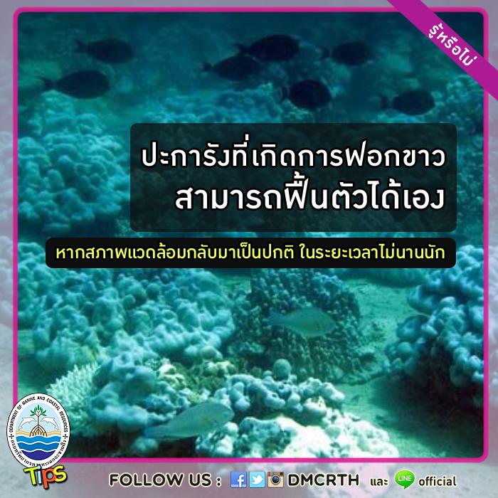 ปะการังฟอกขาว สามารถฟื้นตัวได้เอง