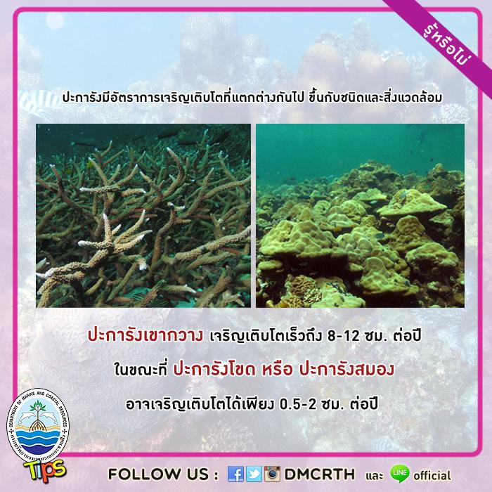 รู้หรือไม่? ปะการังมีอัตราการเจริญเติบโตที่แตกต่างกันไป
