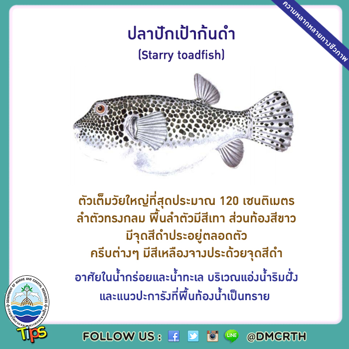 ปลาปักเป้าก้นดำ (Starry toadfish)