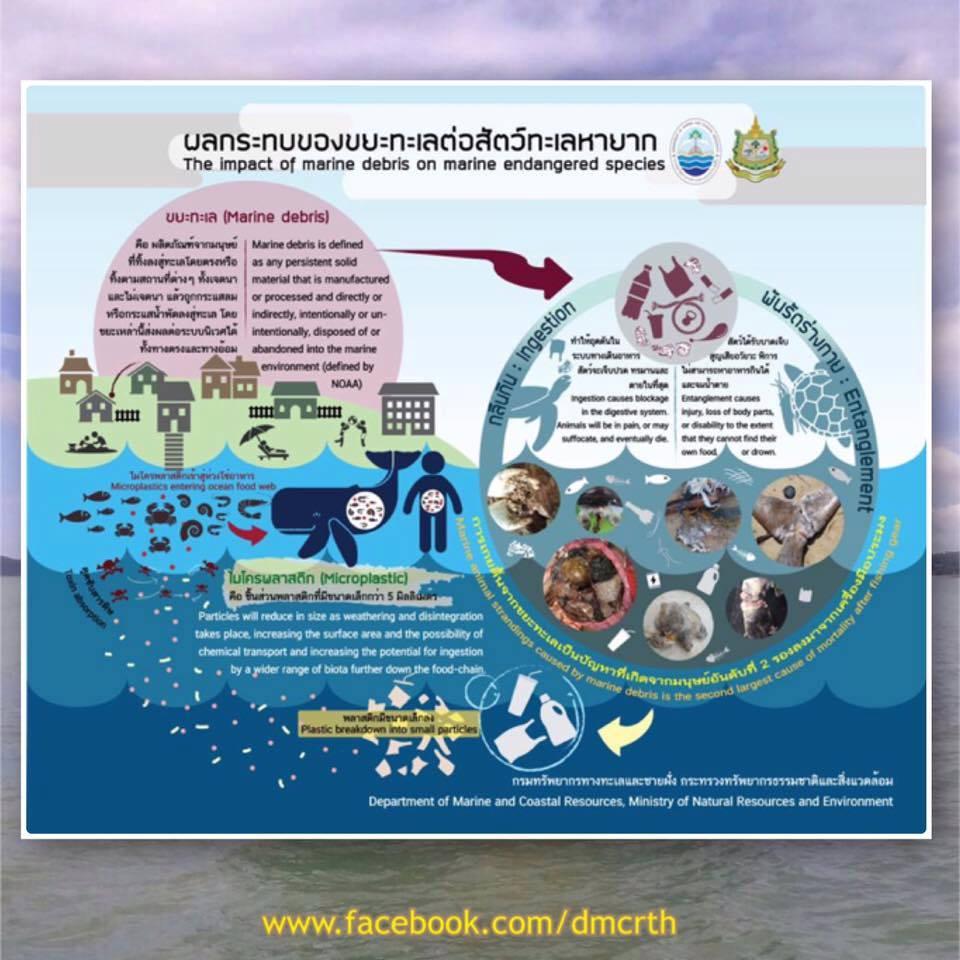 ผลกระทบของขยะทะเลต่อสัตว์ทะเลหายาก