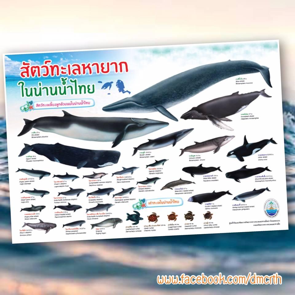 สัตว์ทะเลหายากในน่านน้ำไทย
