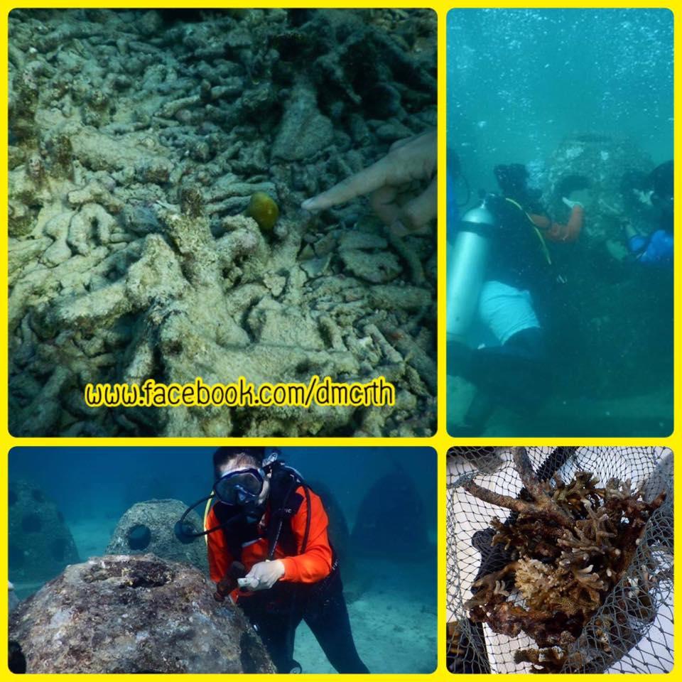 เพิ่มศักยภาพเจ้าหน้าที่ ย้ายปลูกกิ่งปะการังเกาะไม้ท่อน