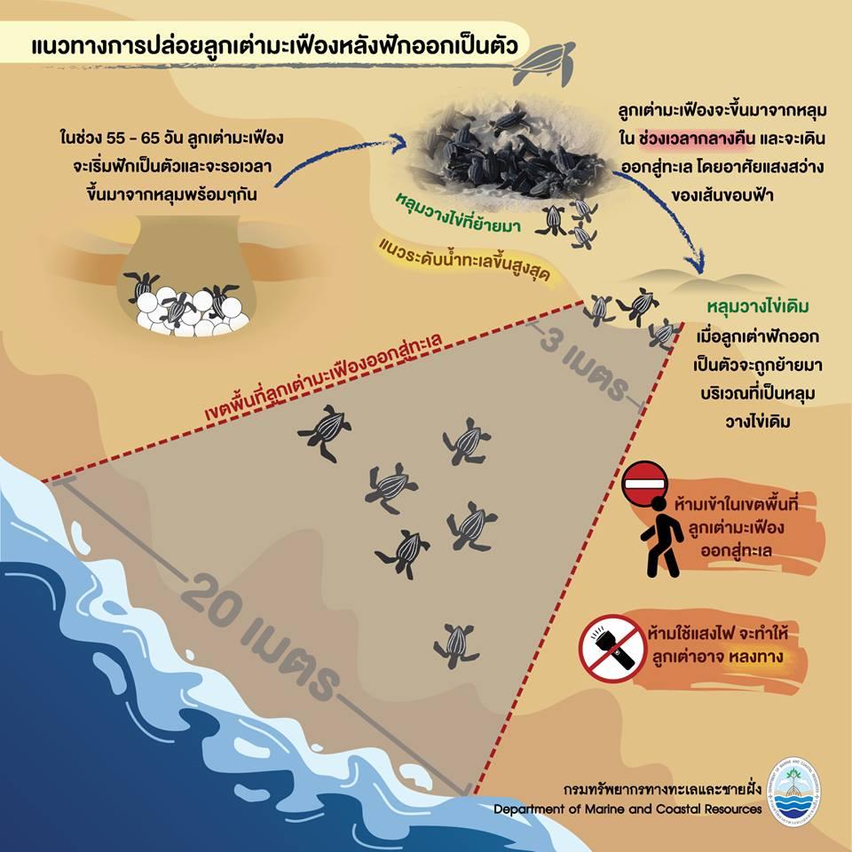 เรารักเต่ามะเฟือง : แนวทางการปล่อยเต่ามะเฟืองลงทะเล