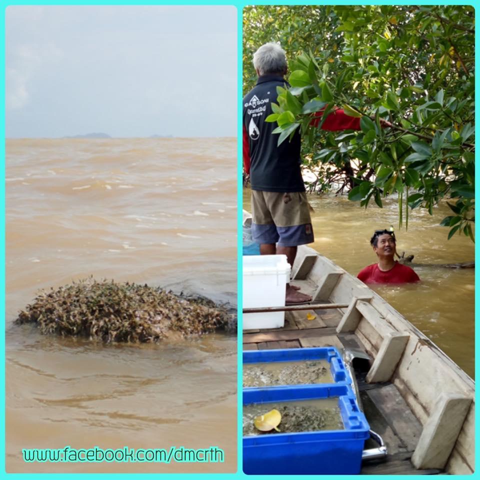 ปาบึกผ่าน หญ้าทะเลอ่าวไทยตอนกลางเสียหายเล็กน้อย