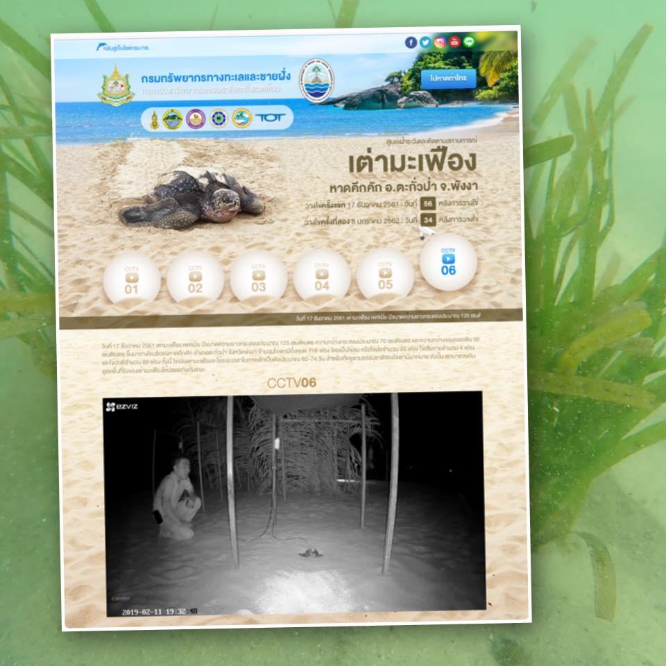 คึกคักกันทั้งหาด มาแล้วลูกเต่ามะเฟืองตัวแรก