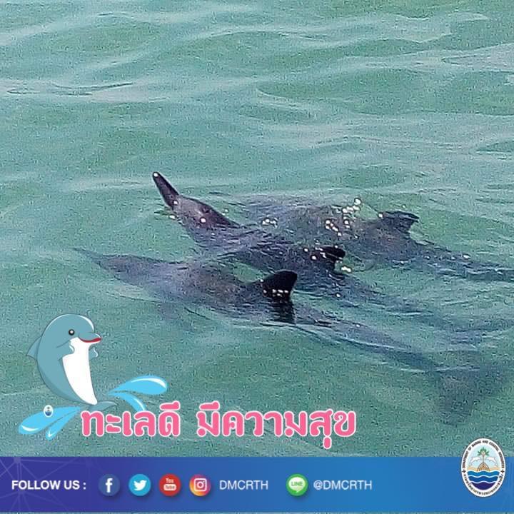 สวัสดี พี่น้องเครือข่ายอนุรักษ์ทะเลไทย