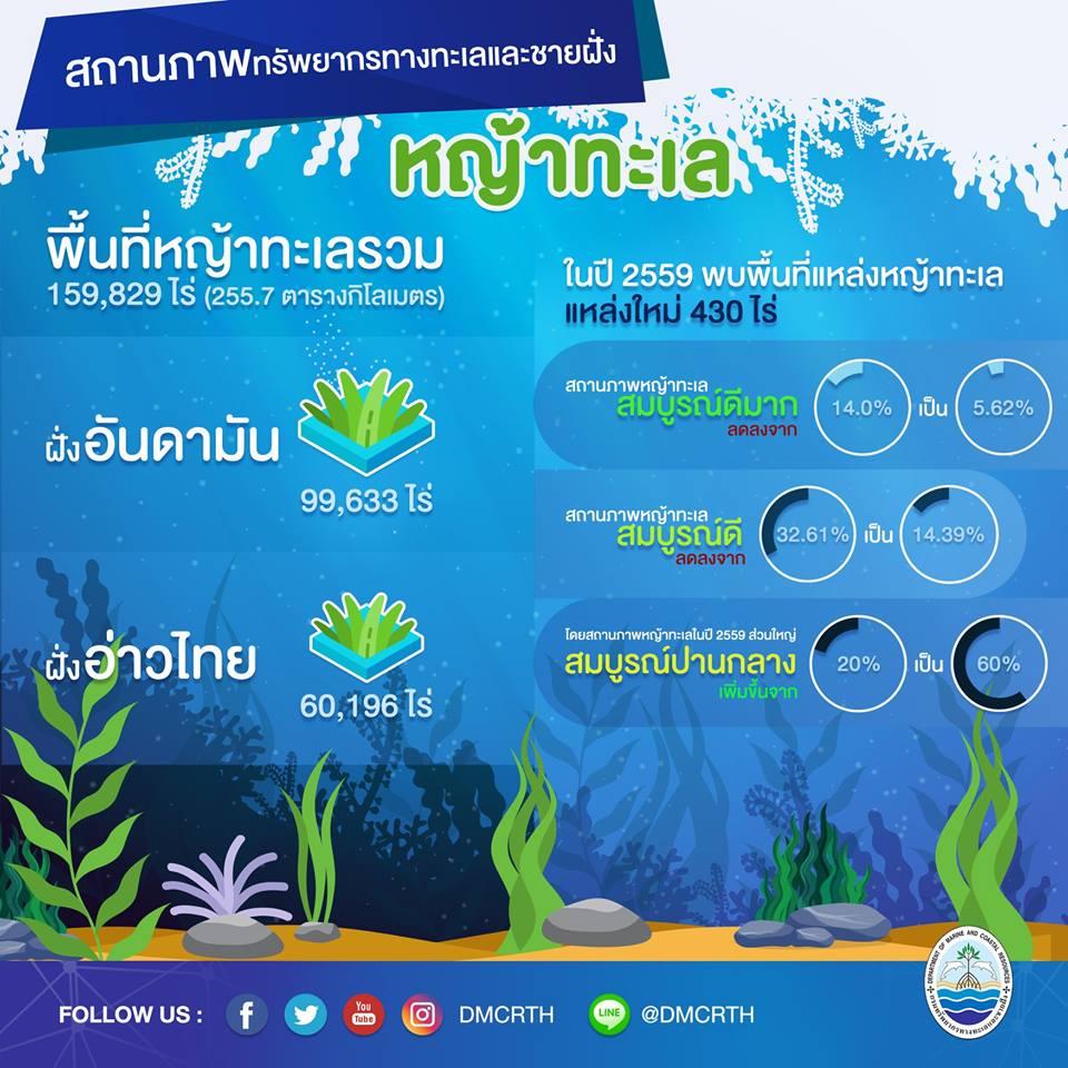 สถานการณ์ ทช. : หญ้าทะเลของไทย
