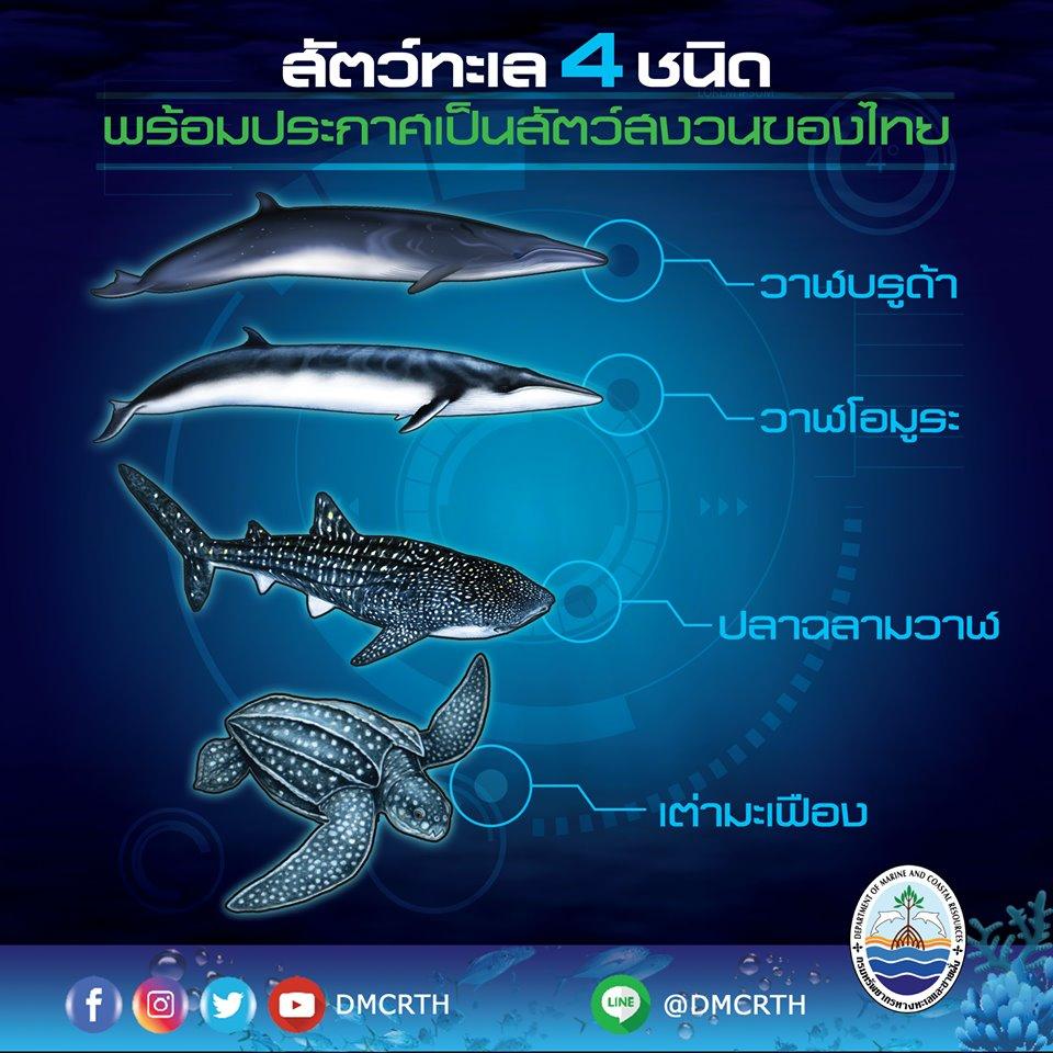 กฏหมายใหม่เปิดช่อง พร้อมเพิ่มสัตว์ทะเลหายากเป็นสัตว์สงวน