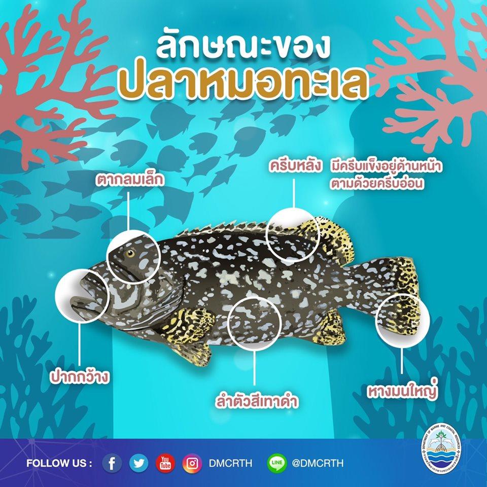 องค์ความรู้ ชีวิตอัศจรรย์ของปลาหมอทะเล ตอนที่ ๒