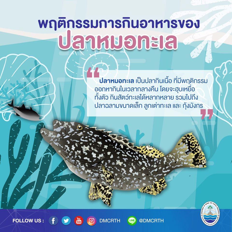 องค์ความรู้ ชีวิตอัศจรรย์ของปลาหมอทะเล ตอนที่ ๓