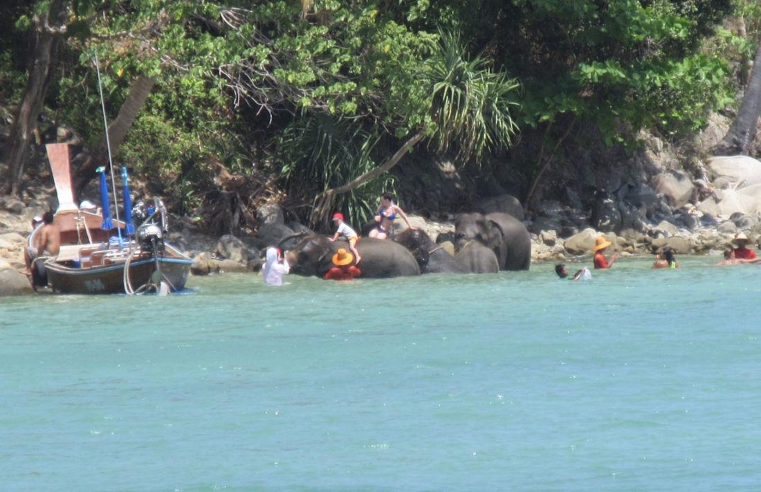 สบทช.9 ลงตรวจสอบ หลังโซเชี่ยลวิจารณ์คลิปนำช้างลงเล่นน้ำ ถ่ายภาพกับ นทท.หน้าหาดไตรตรัง