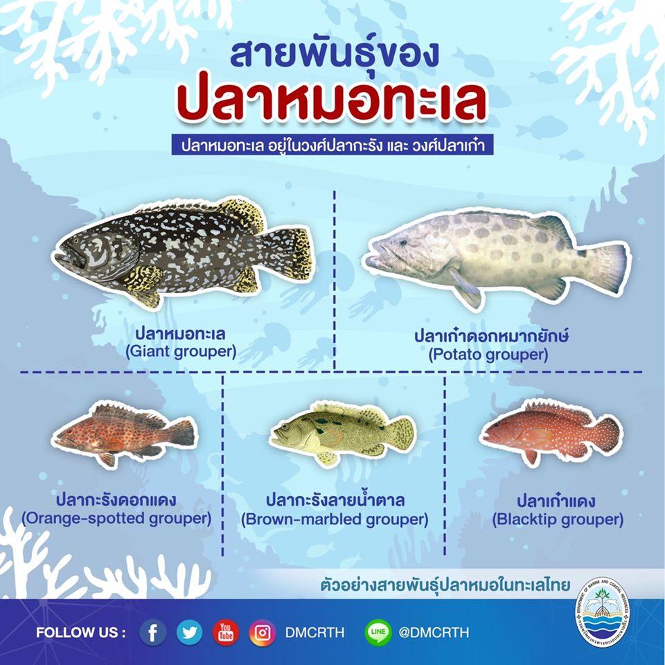 องค์ความรู้ ชีวิตอัศจรรย์ของปลาหมอทะเล ตอนที่ ๔