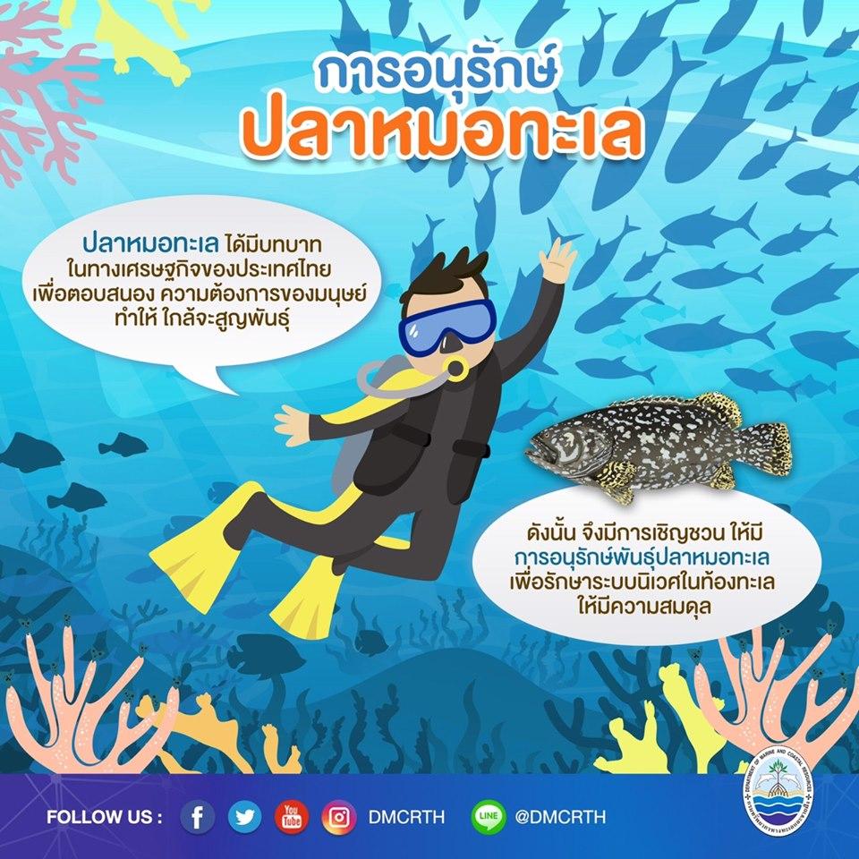 องค์ความรู้ ชีวิตอัศจรรย์ของปลาหมอทะเล ตอนที่ ๖