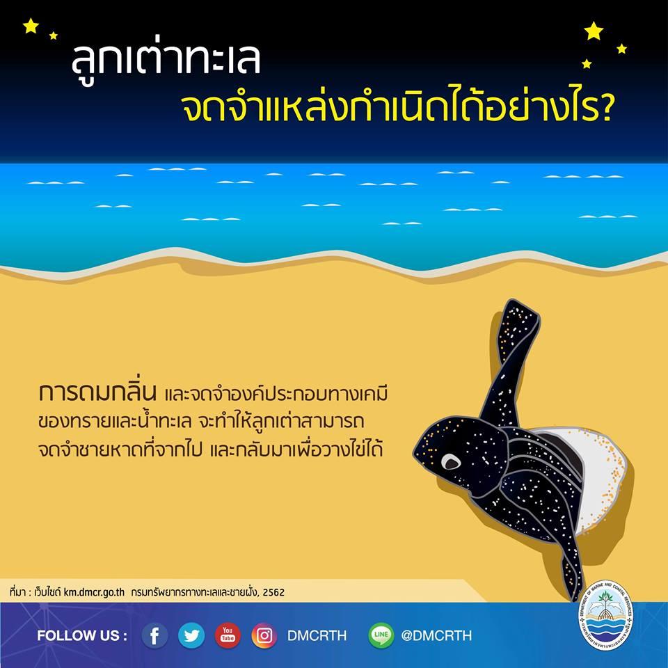 เรารักเต่ามะเฟือง ตอนที่ 7 : ลูกเต่าทะเลจดจำแหล่งกำเนิดได้อย่างไร
