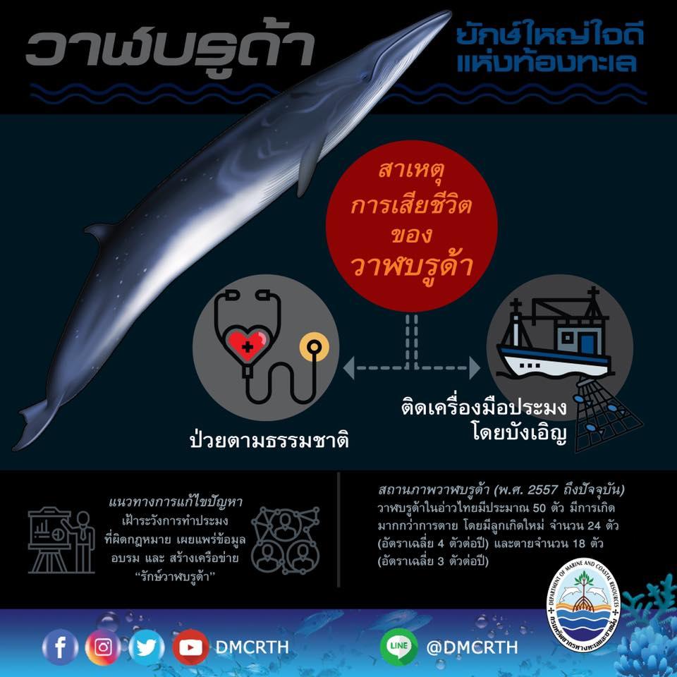 สถานการณ์วาฬบรูด้าในอ่าวไทย