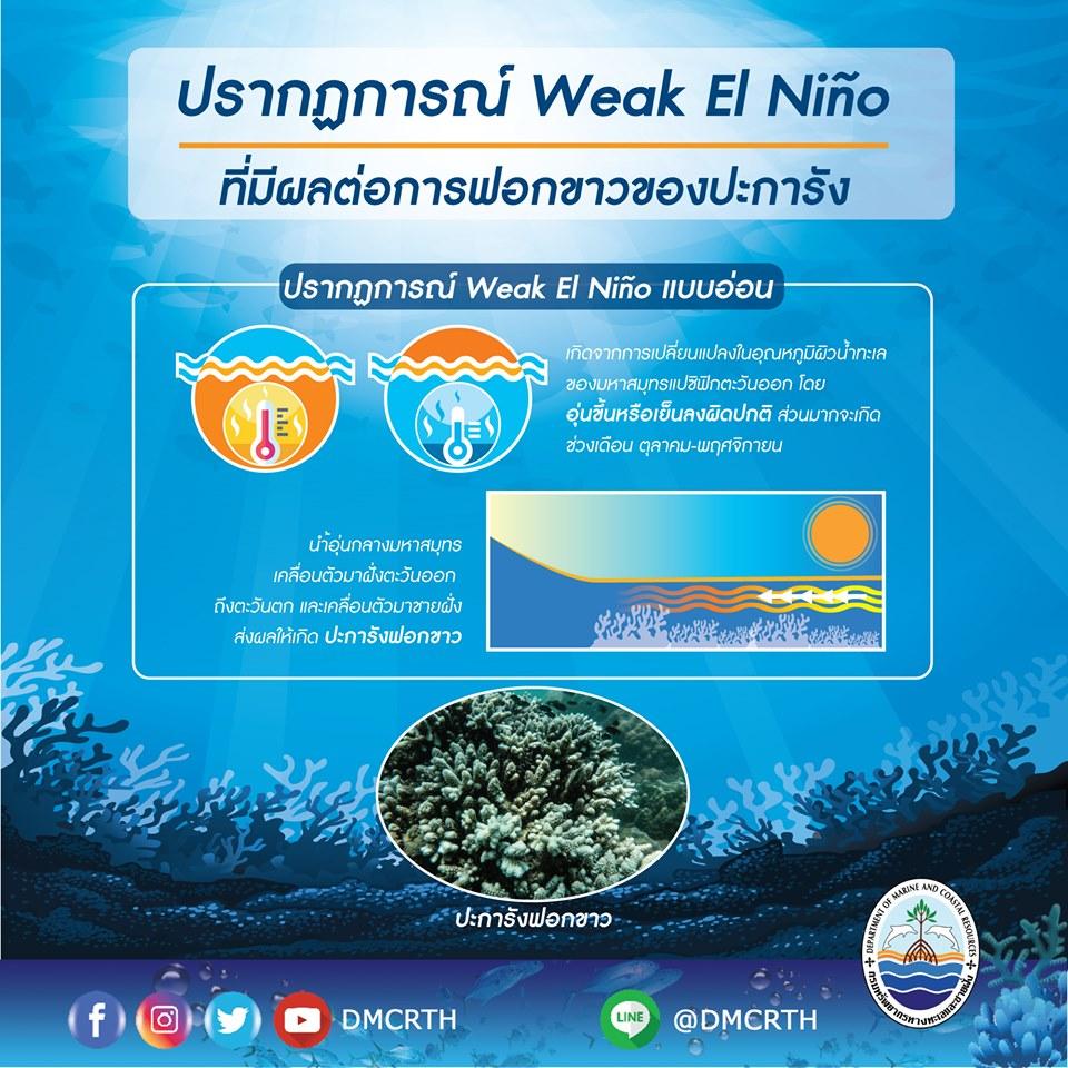 El Niño กับการเกิดปะการังฟอกขาวในปี 2562