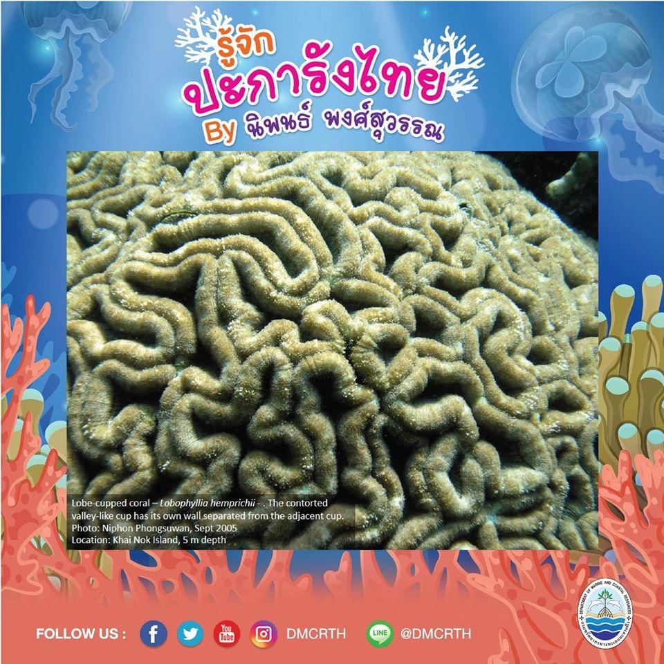 พาท่องโลกใต้ทะเล ทำความรู้จักปะการังวันละตัว #๕๑