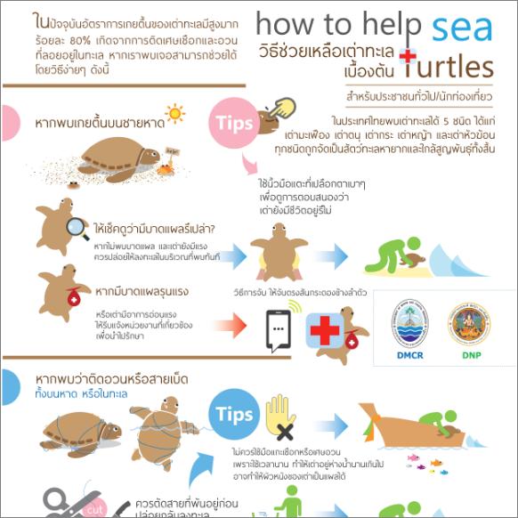 How to help SEA (วิธีช่วยเหลือเต่าทะเล เบื้องต้น)