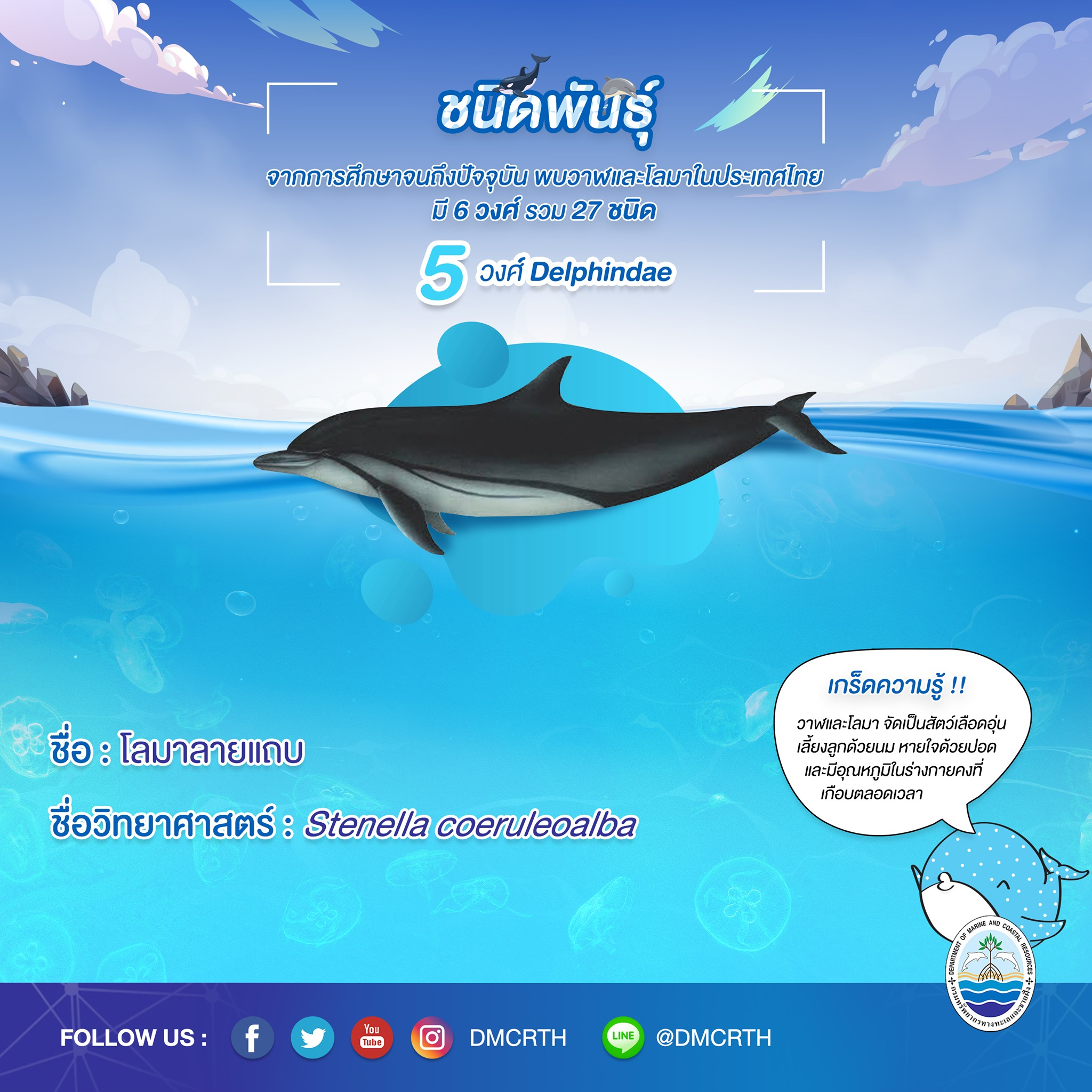 รู้จักเรา รู้จักวาฬ/โลมา วันละชนิด #๒๒ โลมาลายแถบ