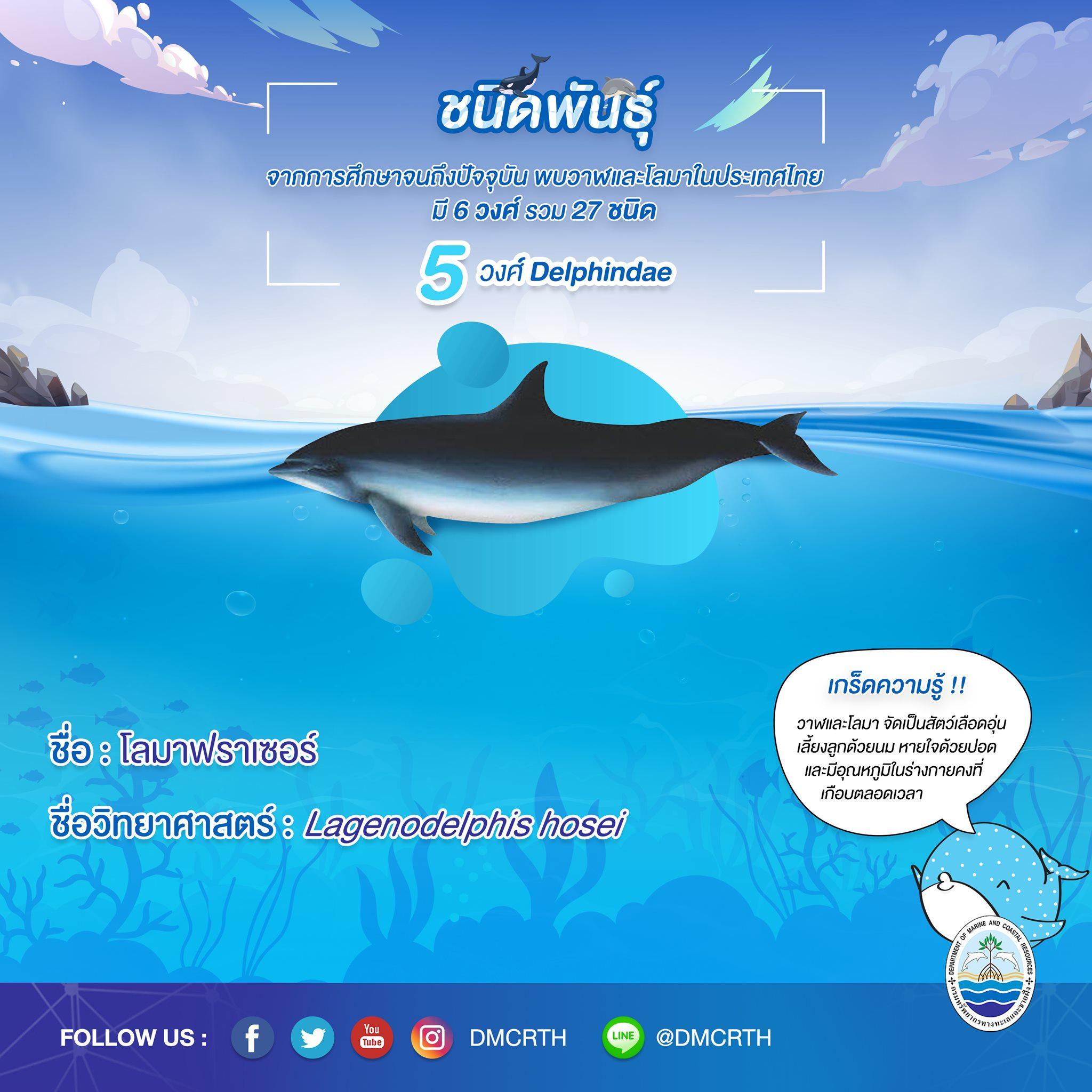 รู้จักเรา รู้จักวาฬ/โลมา วันละชนิด #๒๔ โลมาฟราเซอร์