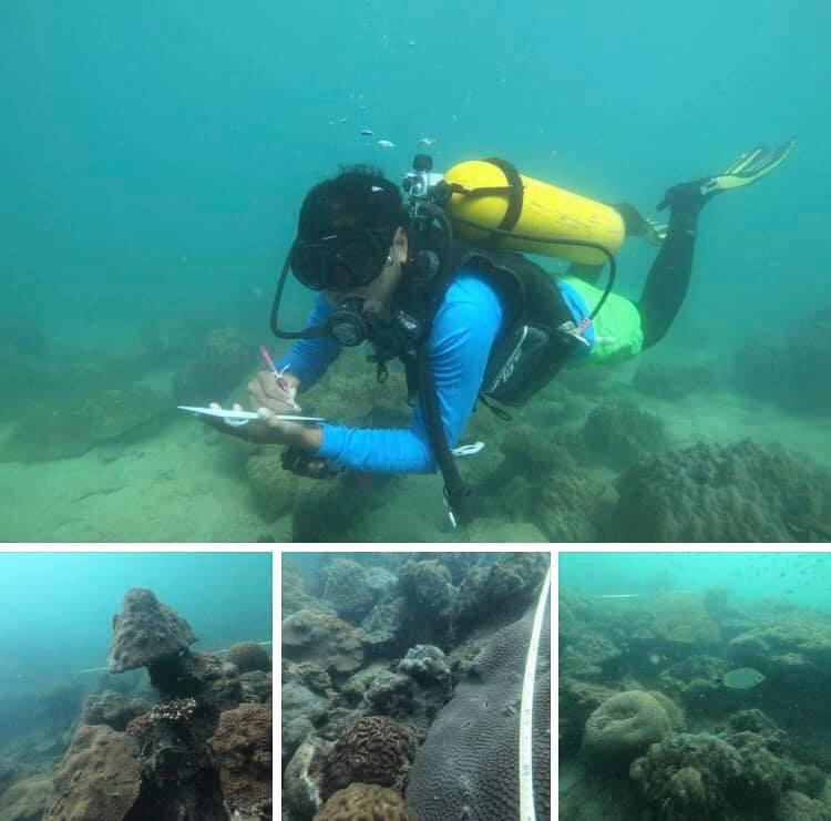 สำรวจสถานภาพแนวปะการังหมู่เกาะมัน ระยอง