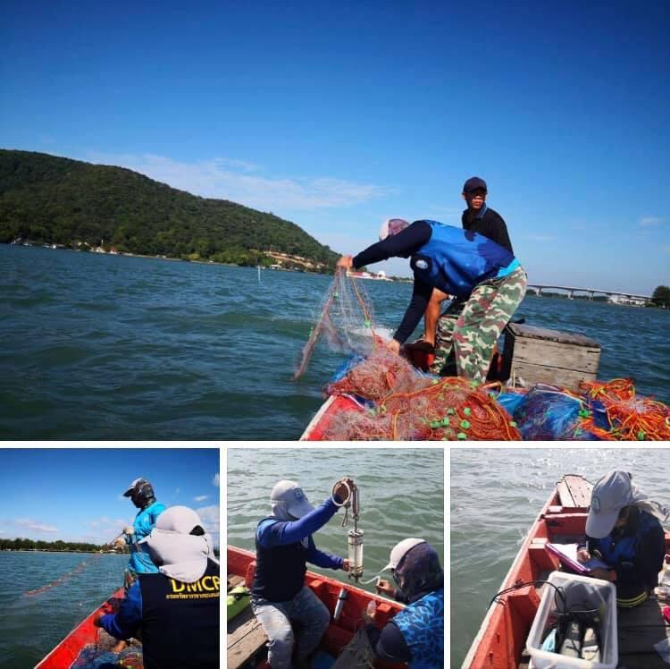 โล่งอก ไม่พบแมงกะพรุนพิษทะเลอ่าวไทยฝั่งตะวันออก
