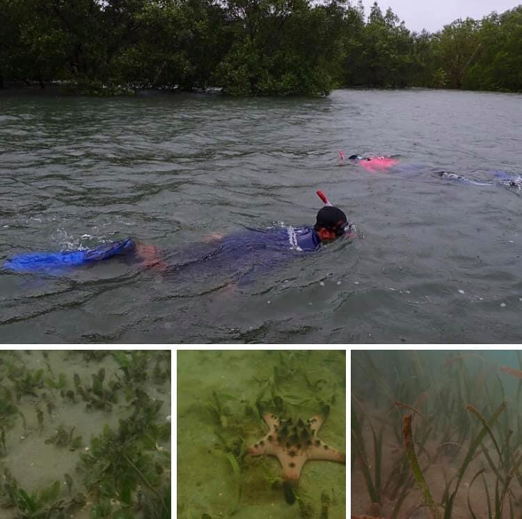 สำรวจการแพร่กระจายหญ้าทะเลกลุ่มเกาะศรีบอยา กระบี่