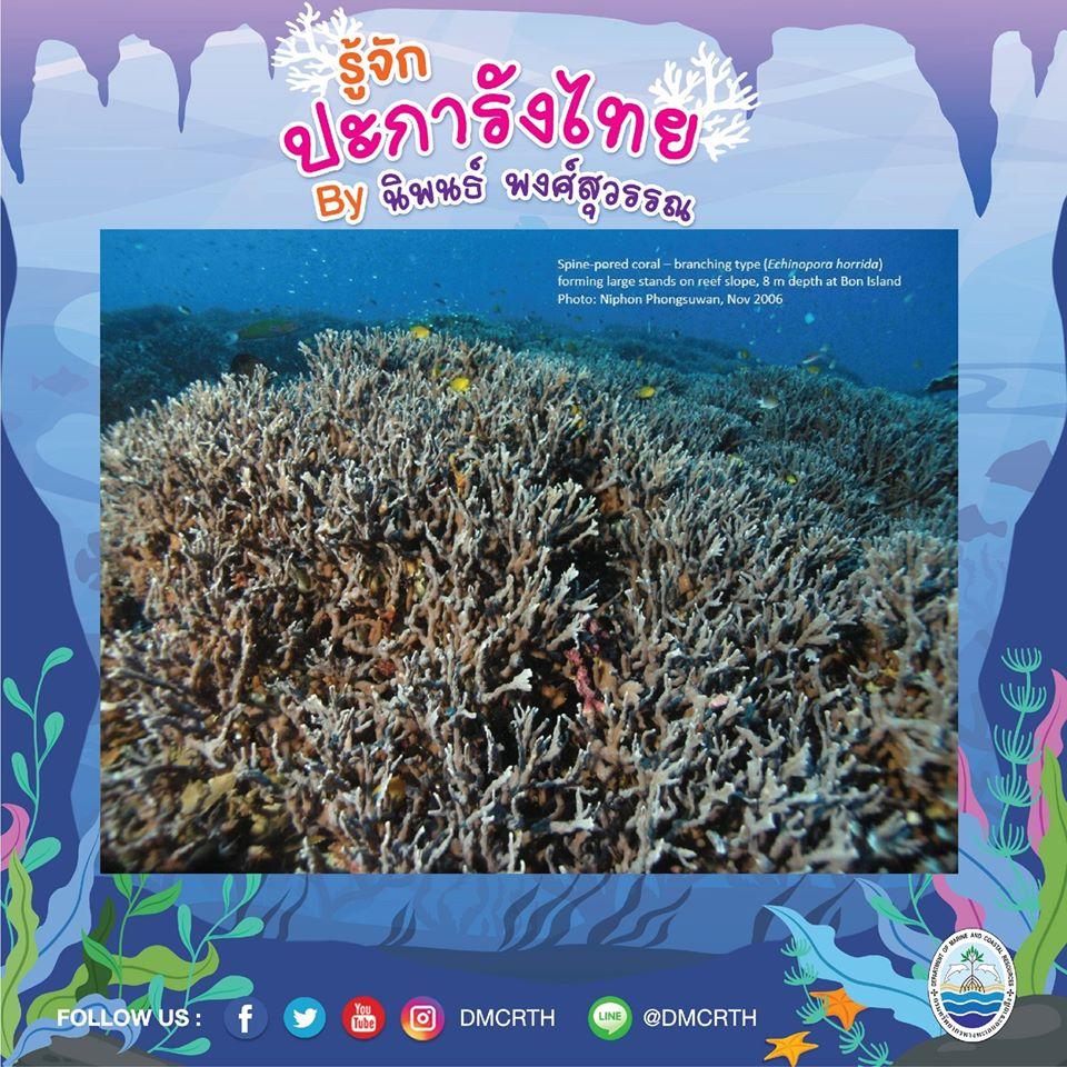 พาท่องโลกใต้ทะเล ทำความรู้จักปะการังวันละตัว #๒๖