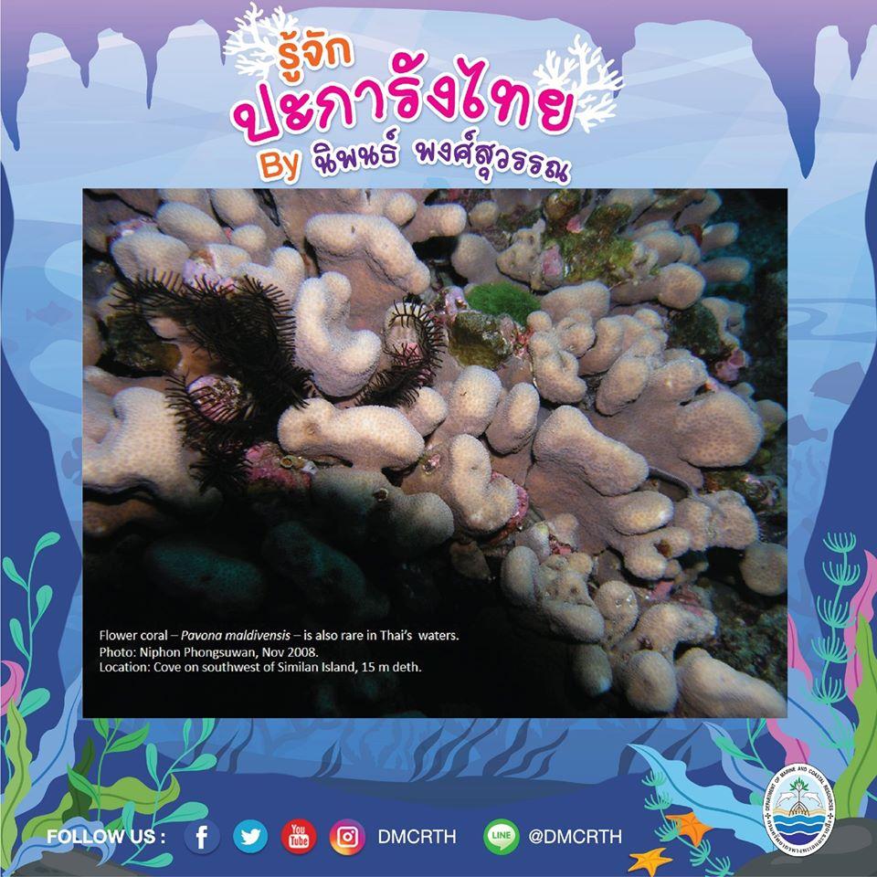 พาท่องโลกใต้ทะเล ทำความรู้จักปะการังวันละตัว #๒๗