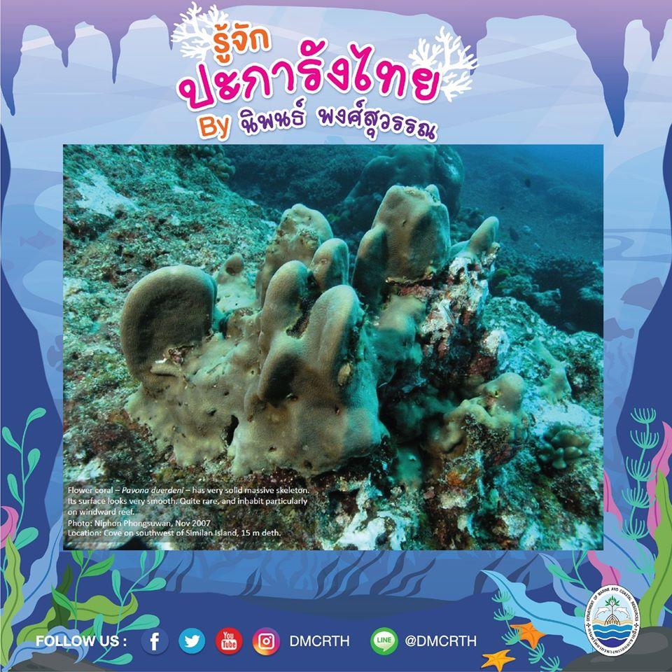 พาท่องโลกใต้ทะเล ทำความรู้จักปะการังวันละตัว #๒๘
