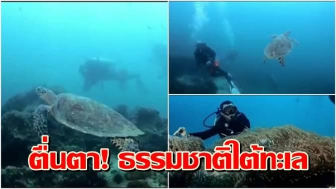 สุดตื่นตา! ธรรมชาติใต้ทะเล ปะการัง-สัตว์ทะเลหายาก สมบูรณ์สวยงาม