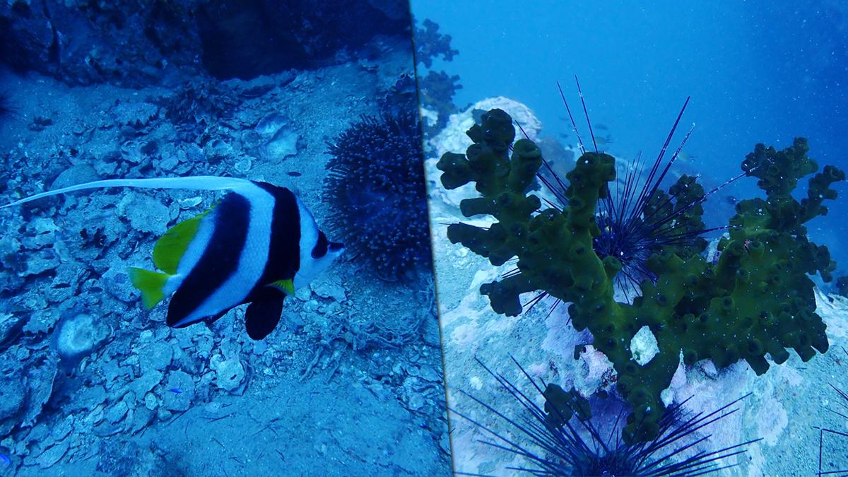 ทช. ตรวจสอบเหตุลอบวางอวน แนวปะการังเกาะเต่า พร้อมเผยภาพความงามใต้ท้องทะเล
