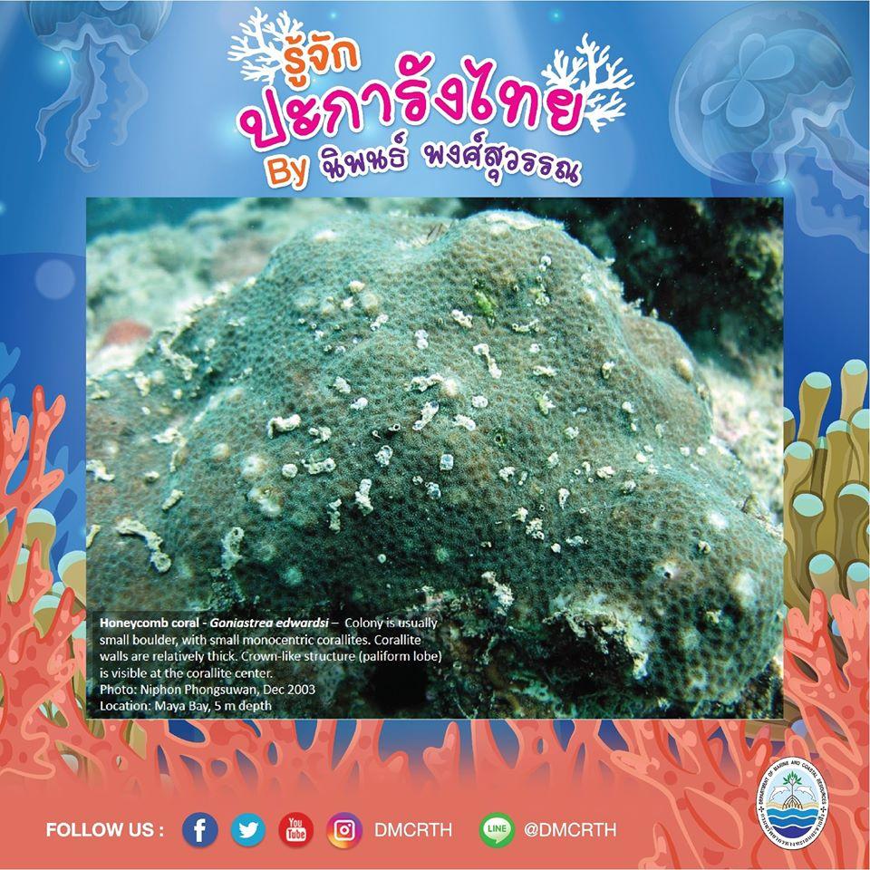 พาท่องโลกใต้ทะเล ทำความรู้จักปะการังวันละตัว #๖๐