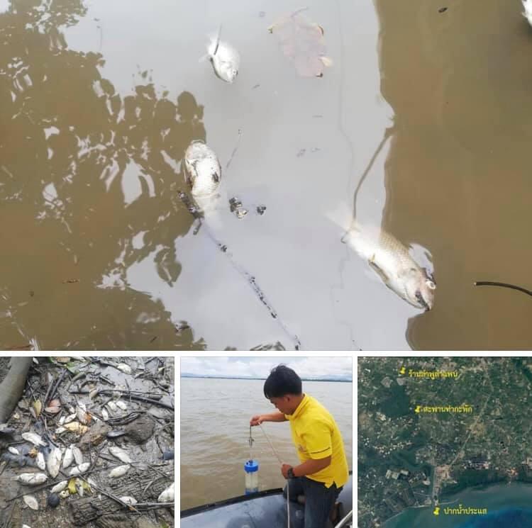 ลงพื้นที่ตรวจสอบเหตุปลาตายจำนวนมาก ระยอง