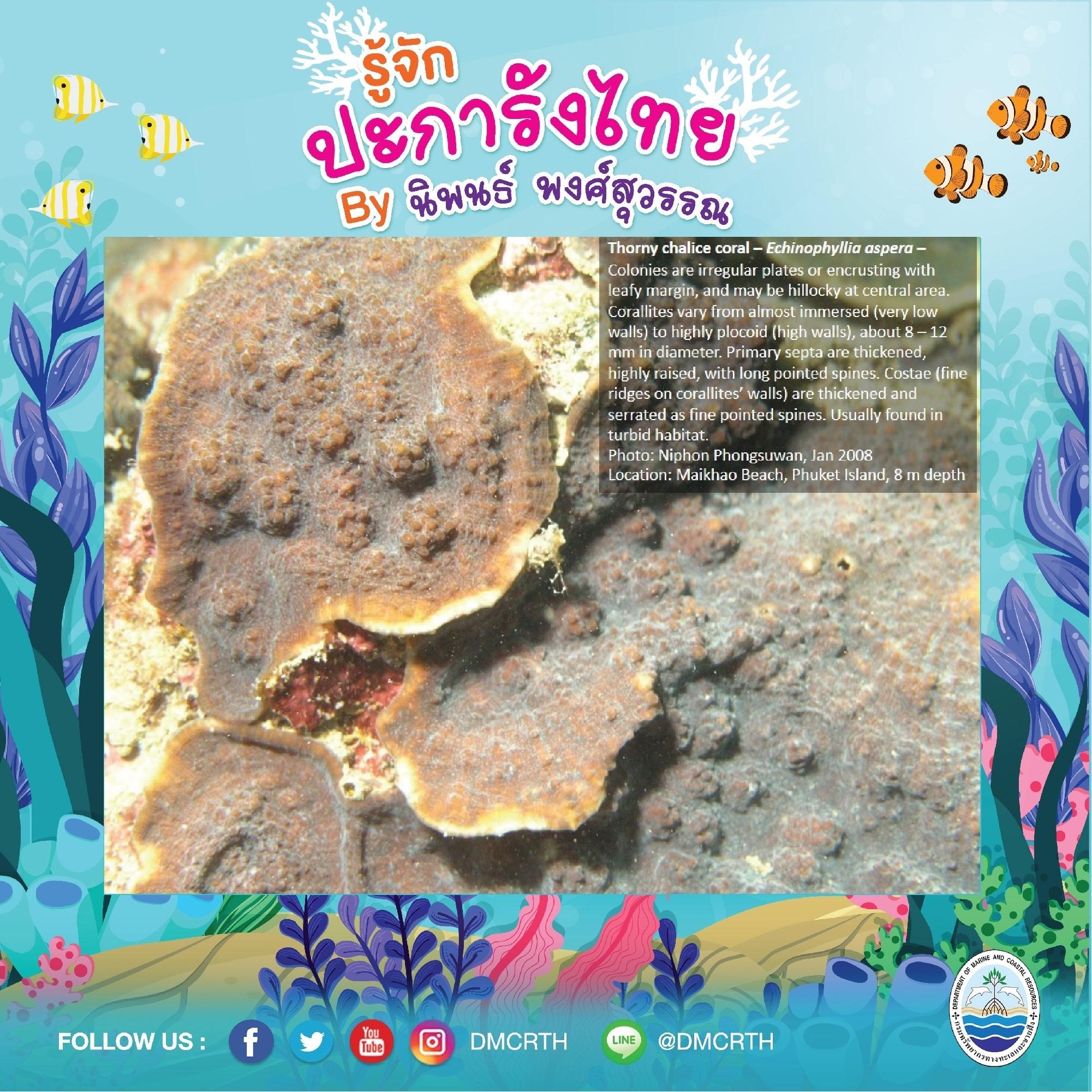 พาท่องโลกใต้ทะเล ทำความรู้จักปะการังวันละตัว #๙๓