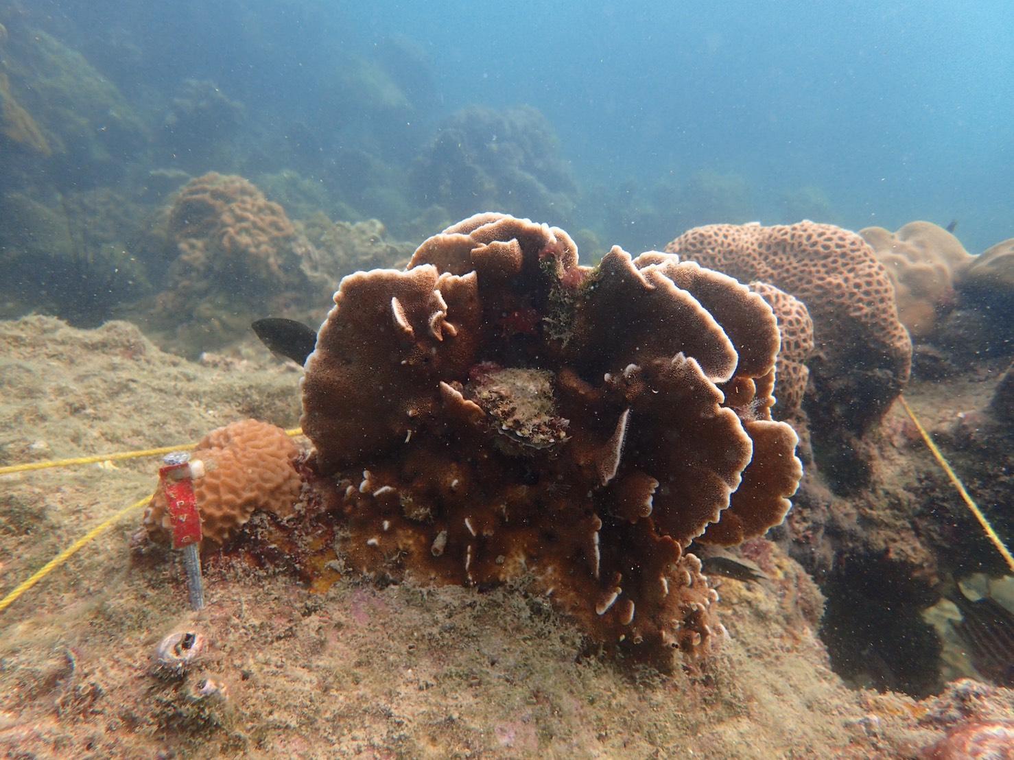 ศูนย์ฯ วิจัย ทช. อ่าวไทยฝั่งตะวันออก สำรวจติดตามปะการังฟอกขาว พื้นที่จังหวัดระยอง