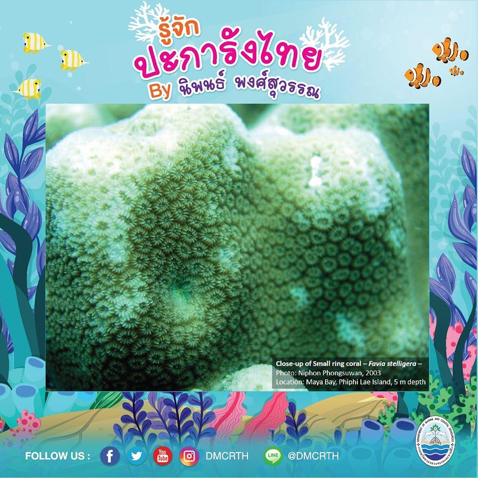 พาท่องโลกใต้ทะเล ทำความรู้จักปะการังวันละตัว #๖๕