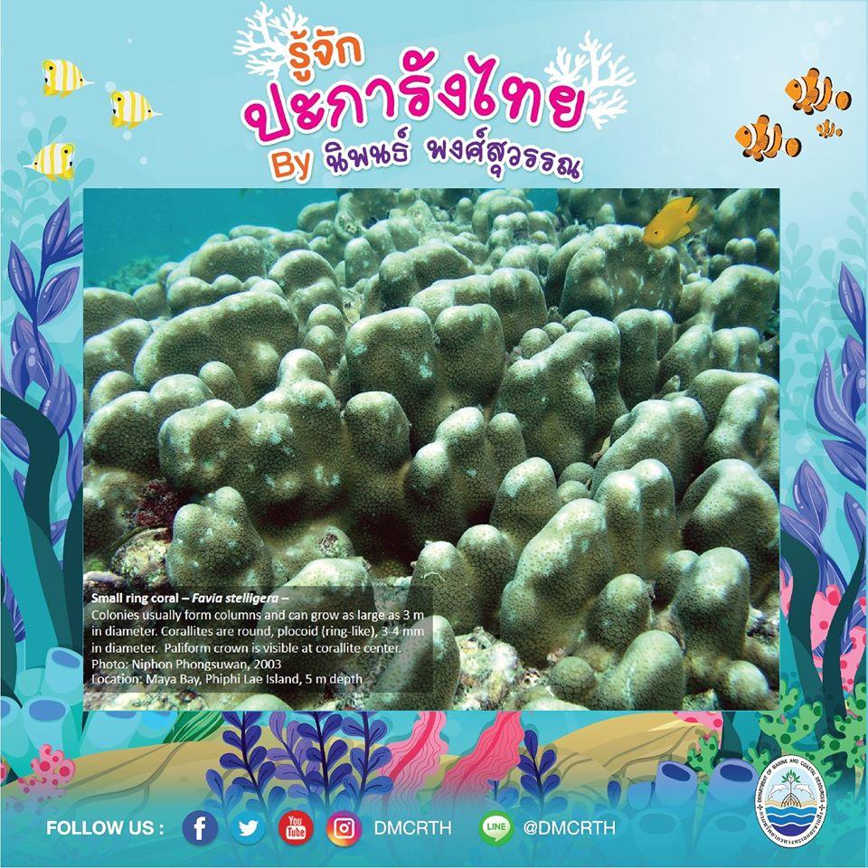 พาท่องโลกใต้ทะเล ทำความรู้จักปะการังวันละตัว #๖๖