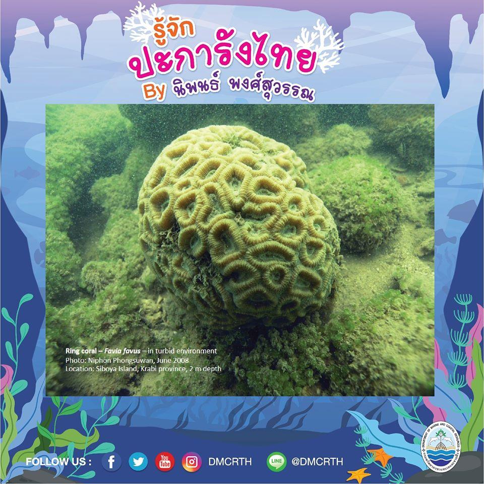 พาท่องโลกใต้ทะเล ทำความรู้จักปะการังวันละตัว #๖๘