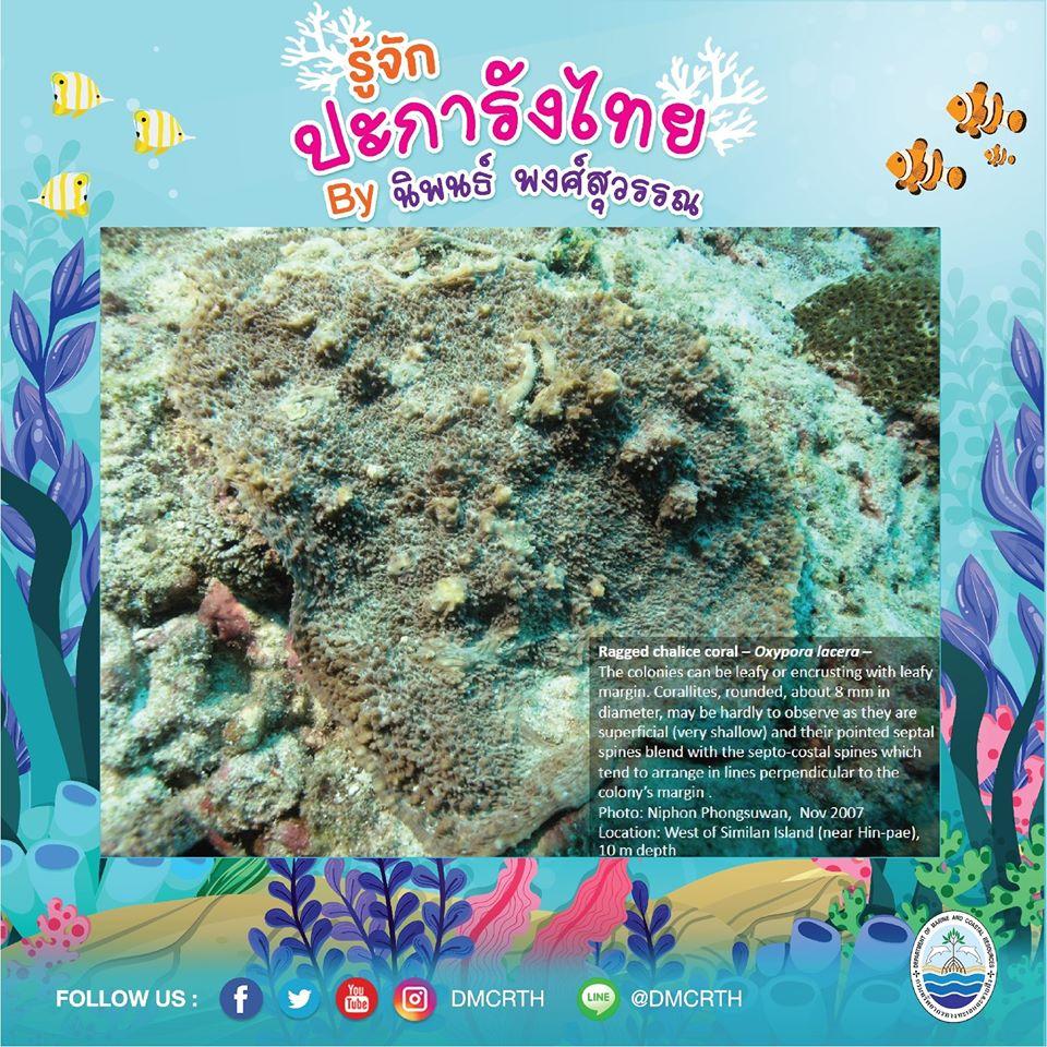 พาท่องโลกใต้ทะเล ทำความรู้จักปะการังวันละตัว #๙๒